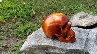 skull-16