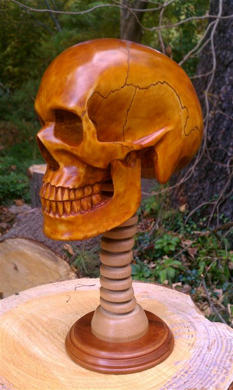 Life Sized, Anatomically Correct Human Skull